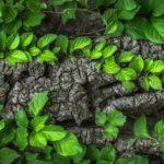 Démarche environnementale d'entreprise
